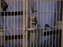Cum iese un papagal din cusca inchisa