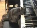 cea mai buna pianista!